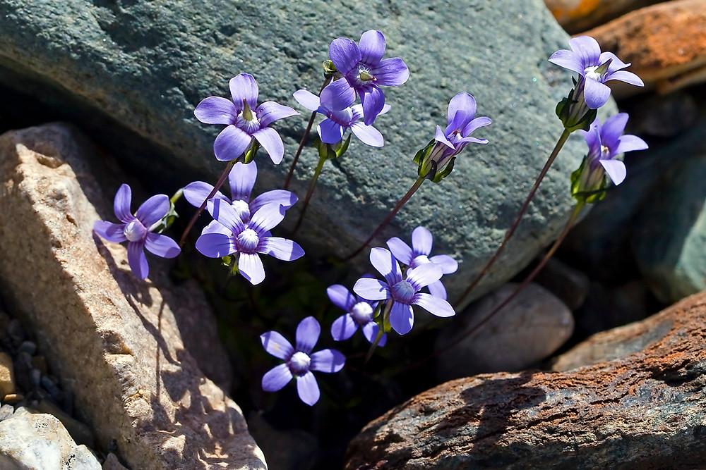 Первые цветы НА КАМНЯХ.jpg