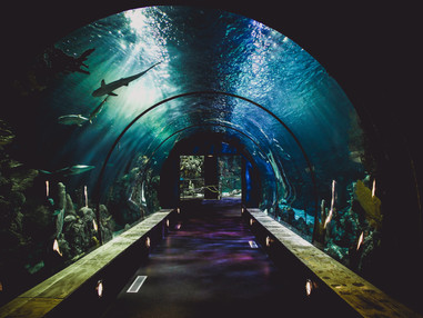 Long Beach is giving away free aquarium tickets to those who get their COVID shots.