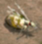 거대여왕개미.webp