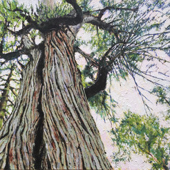 Stately Giant SOLD