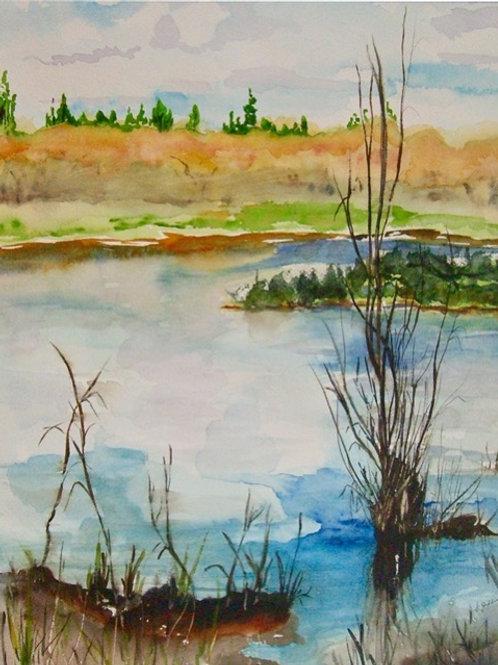 Along Salmon Creek