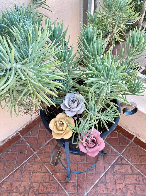 פרחי ורדים פתוחים בינוניים מבטון על גבעול