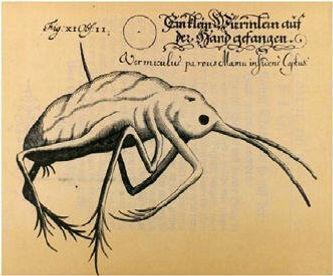 Johann Franz Griendel von Ach und Wankha