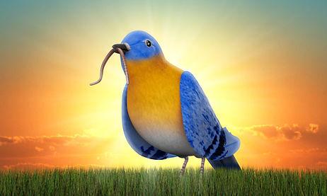 early_bird.jpg