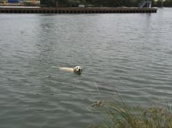 Sortie baignade pour Loupy