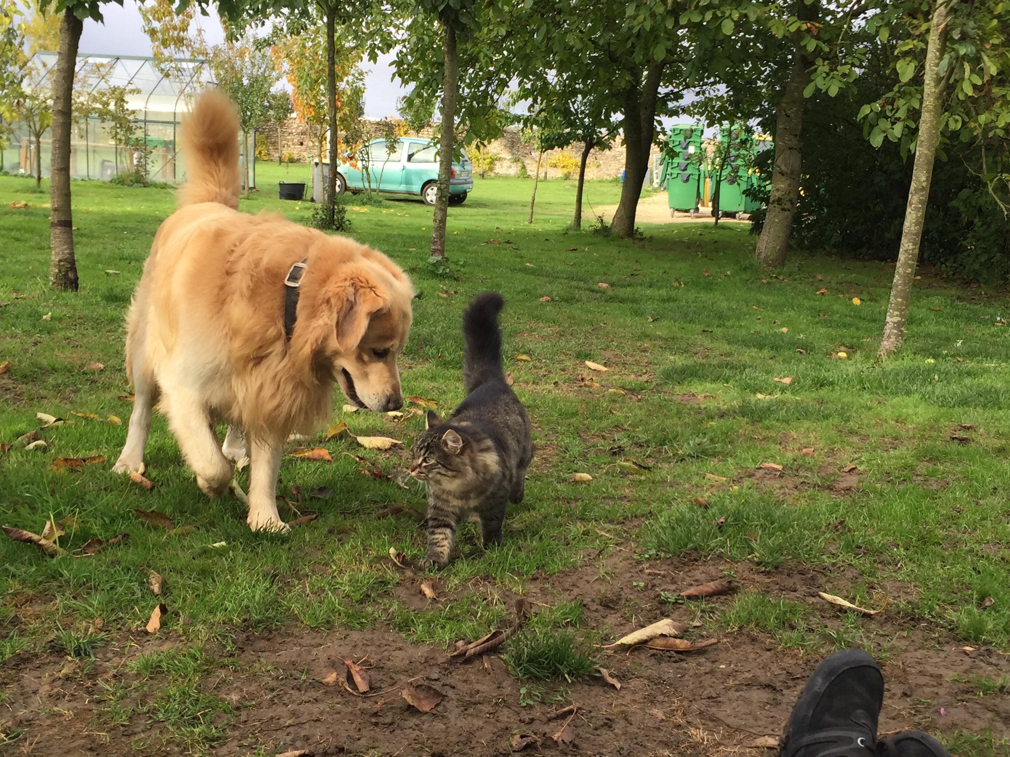 Doug et Lucky le chat de la pension.