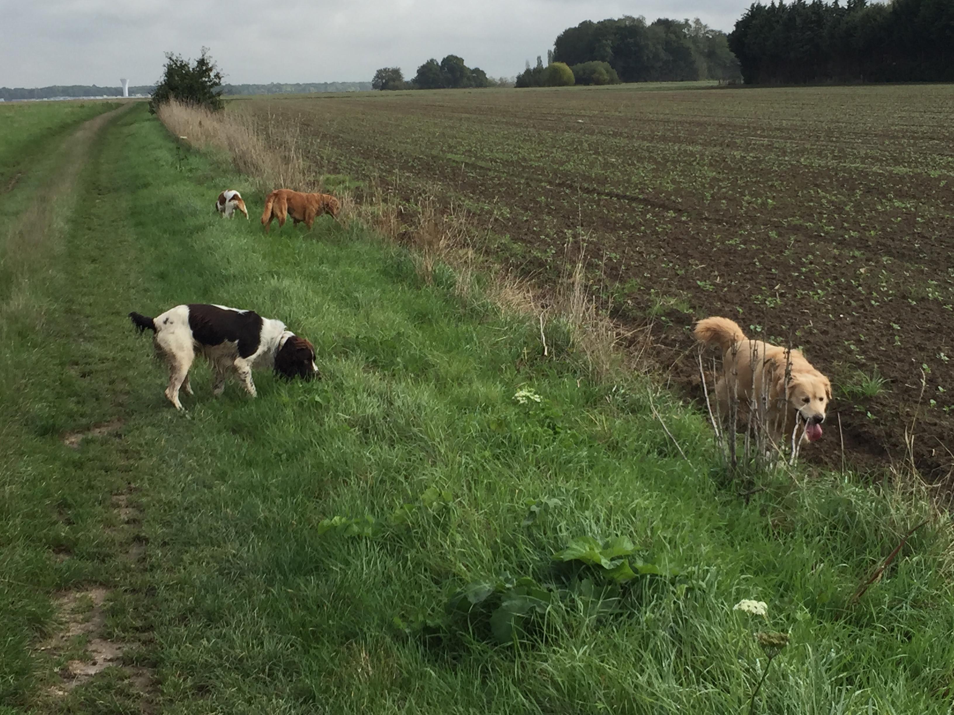 Promenade dans les champs en liberté