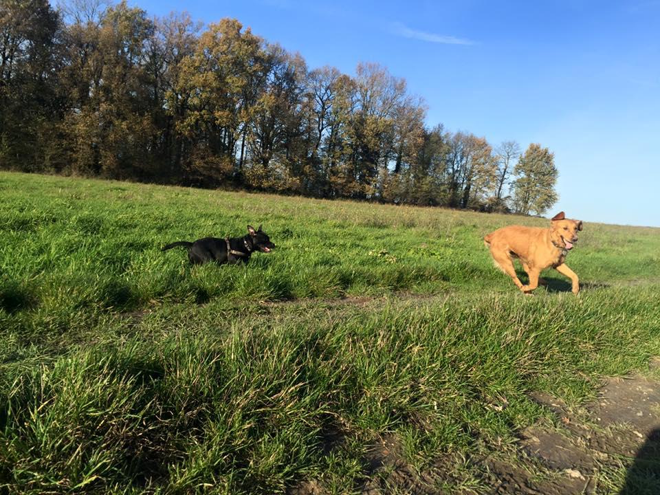 Jersey et Léna,course poursuite.