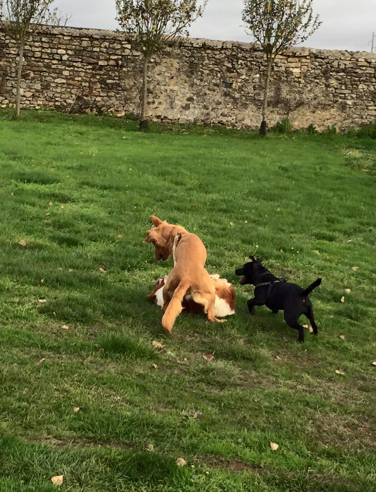 Jeux entre Jersey,Lennon et Léna.