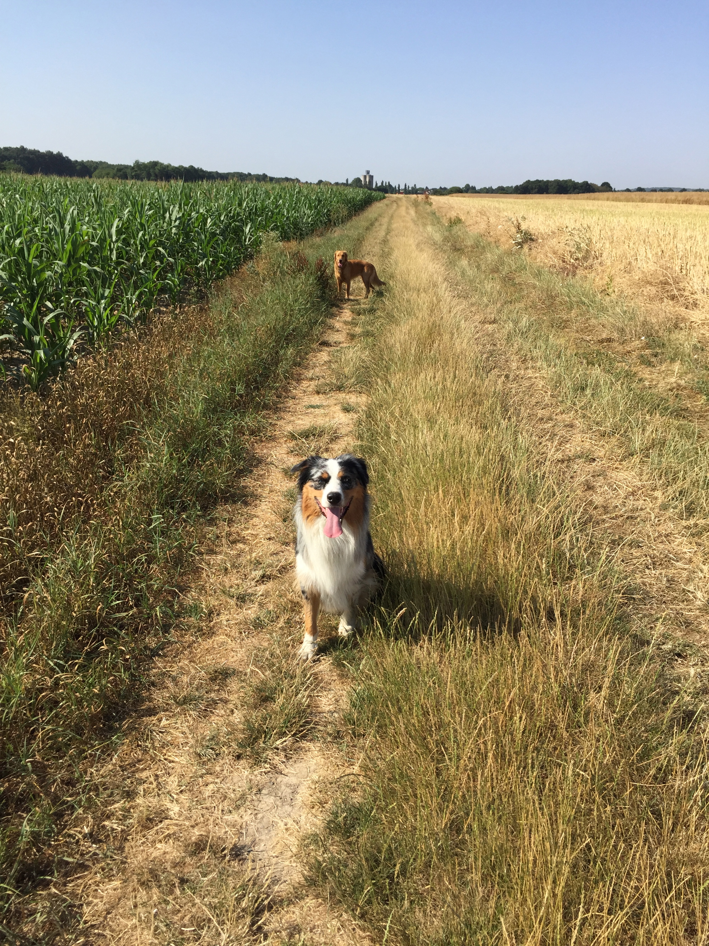 Promenade dans les champs.