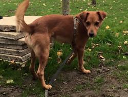 Merlin, chien de la SPA, 6ans