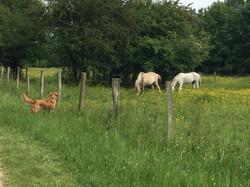 Intriguée par les chevaux