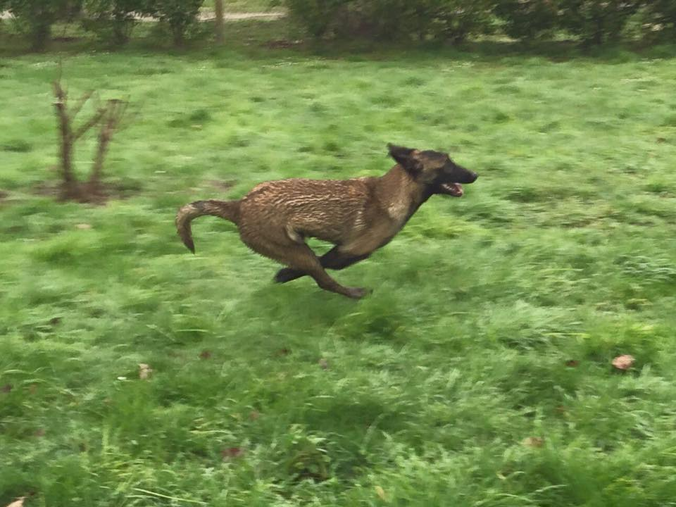 Luna en pleine course.