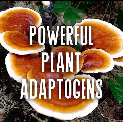 Mushrooms and Cannabis Adaptogens