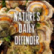 Turkey Tail Mushrooms Nature's Daily Defender Blossom Canna Mushrooms Cannabis
