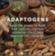 Adaptogens Mushrooms Cannabis