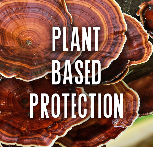 Reishi Plant Protection Mushrooms and Cannabis