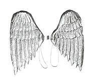 silver wings.jpg