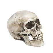 skull single.jpg