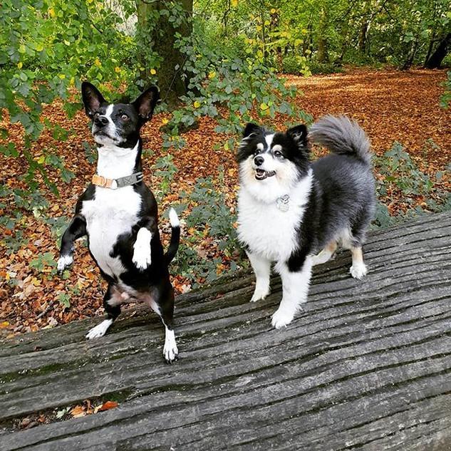 Did someone say treats_ 🤣__#doggydaycar