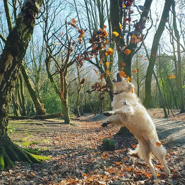 Lilly ❤'s Leaves 🤣🐕🐶🍂🍃 #doggydaycar