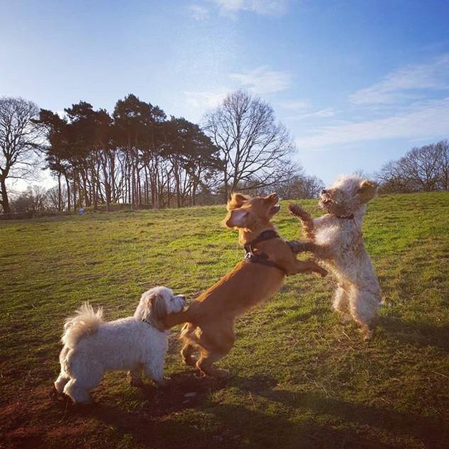Please can I play 😍🐕😘🐶 #doggydaycare