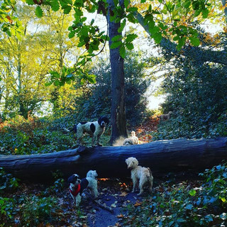 Rural walks for city dogs.... _because t