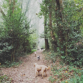 Fun in the fog today 🐕🐶🐕🐶 #doggydayc
