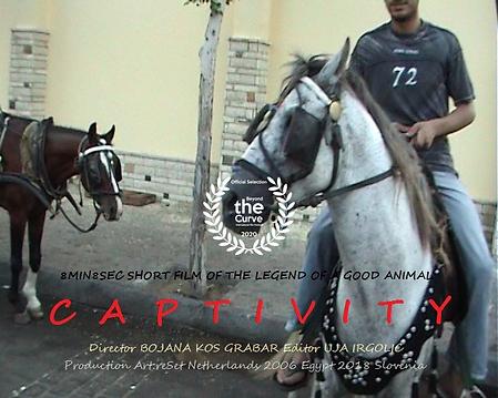 Captivity - Animal Horse.png