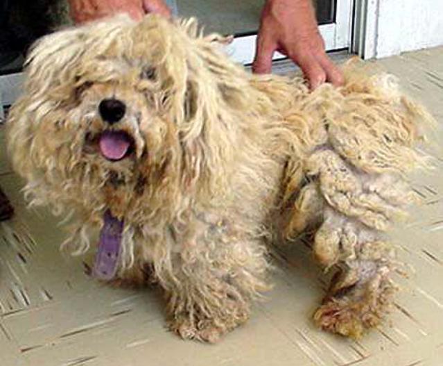 barking cuts dog grooming lincoln