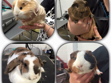 yes we do rabbit and guinea pig grooming!!
