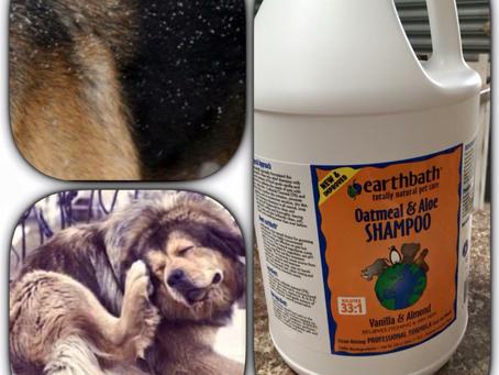 great shampoo for sensitive skin