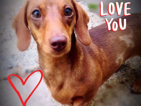 Show yaLove for ya pooch this valentine day