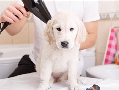 puppy grooming!