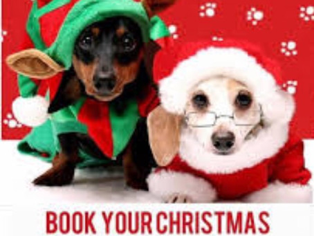 Don't forget to book Xmas groom to avoid disappointment 🐾🐾