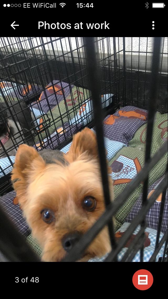 barkingcuts, dog grooming lincoln