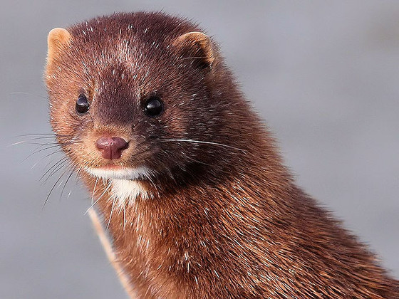 Real Mink, Synthetic Mink, Silk, Flat Lashes....What's the difference?