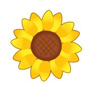 ひまわり(花のみ)
