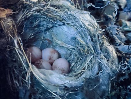 4個めの産卵