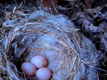 3個めの産卵