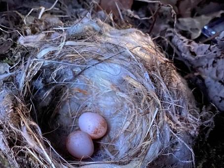 2個めの産卵