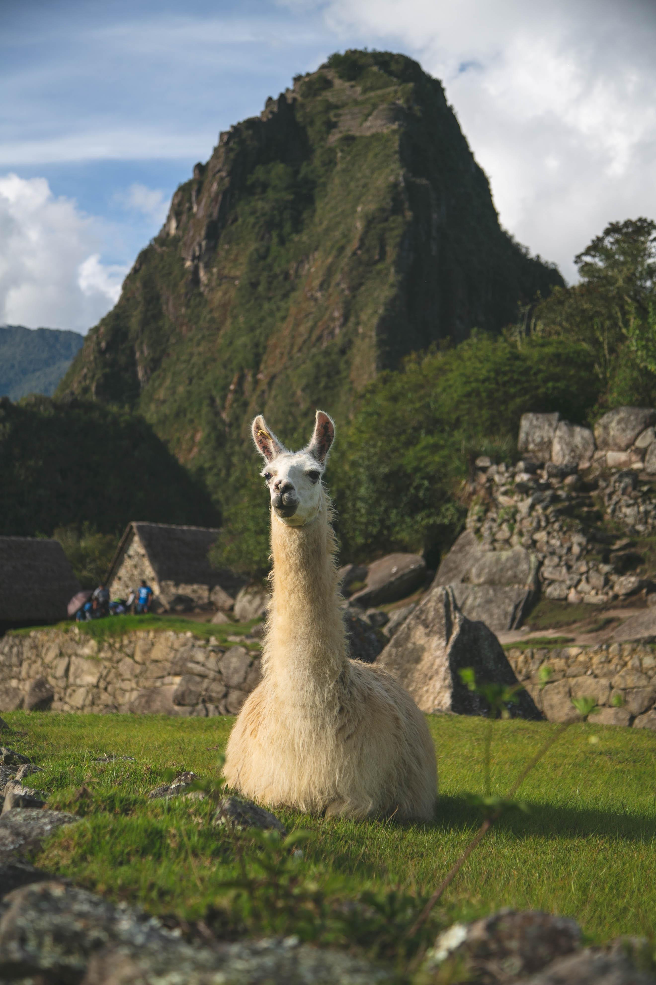 Machu Picchu-66