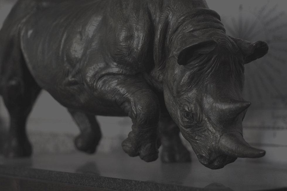 Black-Rhino-11_edited.jpg