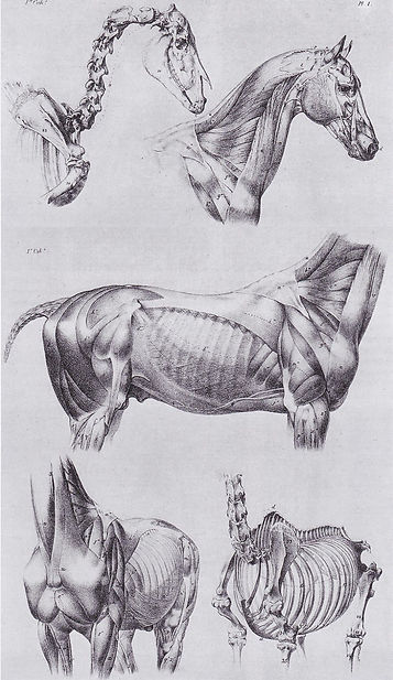 Anatomy-small.jpg