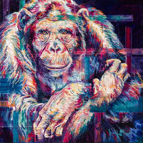 Chimpanzee Gaze