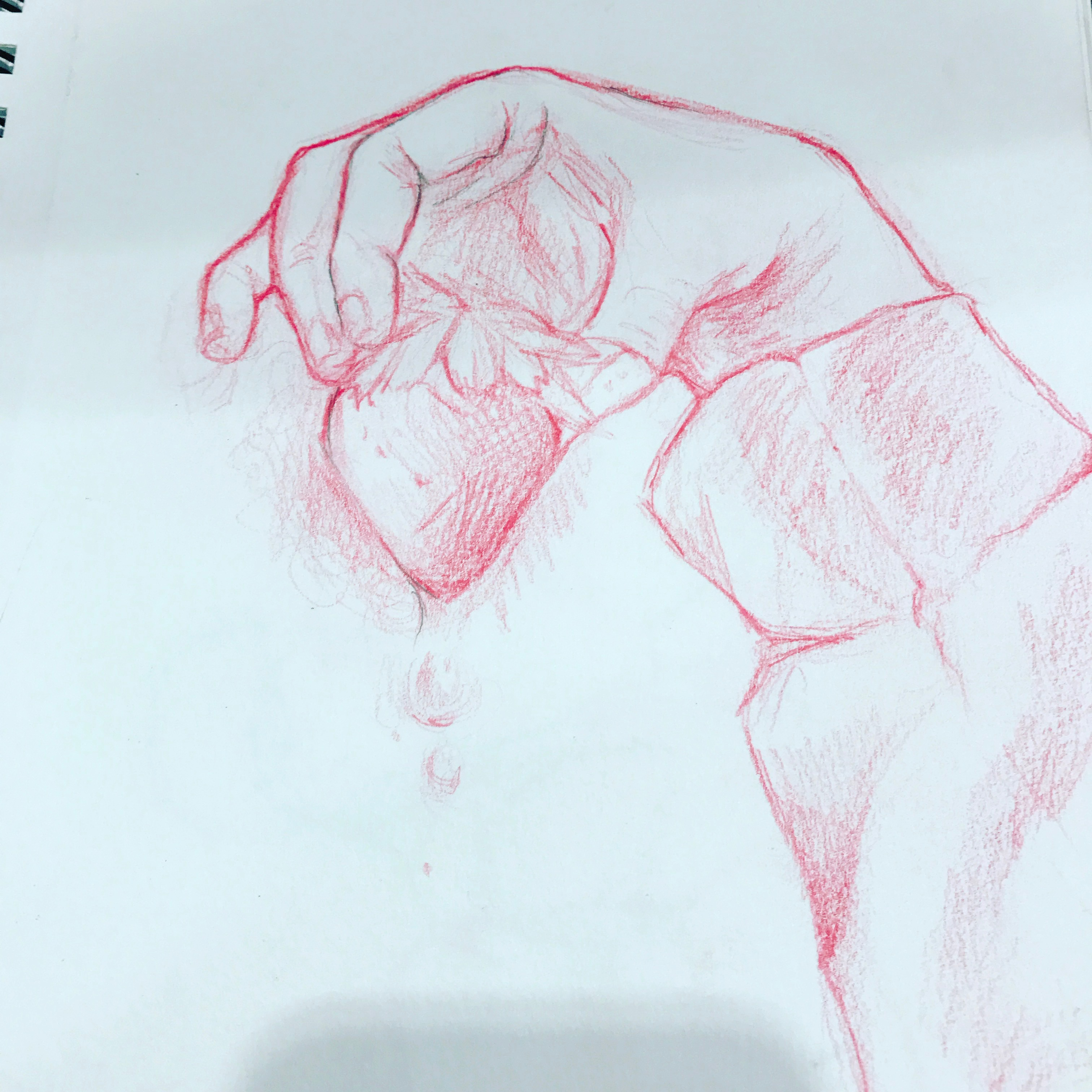 Strawberry Sketch 2