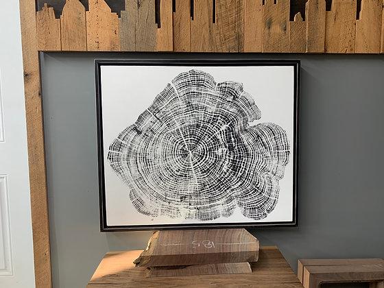 Honey Locust Growth Ring Print