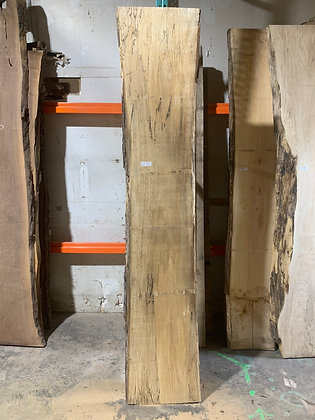 """Spalted Maple (1224) 100"""" L x 16-19"""" W x 1.5"""" T"""