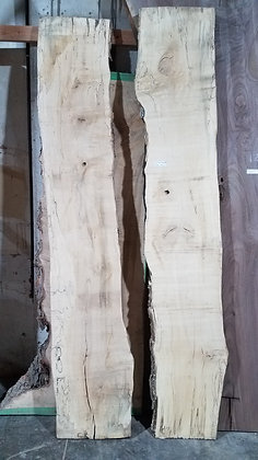 "Spalted Maple (1241) 100"" L x 31-38.5"" W x 2"" T"