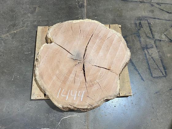 """Red Oak (1444) 47"""" L x 44"""" W x 5"""" T"""